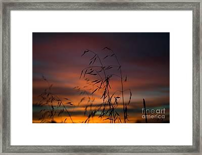 Pastel Moment Framed Print