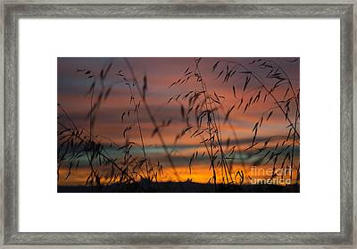 Pastel Moment II Framed Print