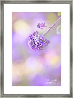 Pastel Moods Framed Print