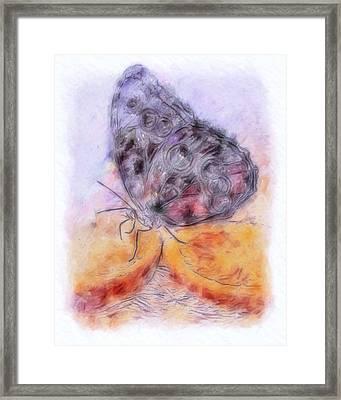 Pastel Orange Julius Framed Print by Jill Balsam
