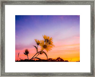Pastel Palette Framed Print by Shane Taitt