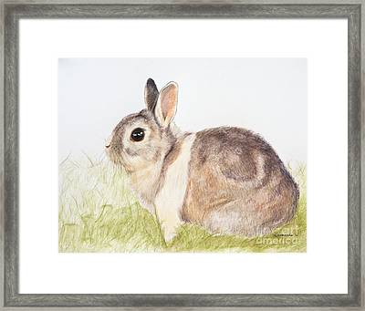 Pastel Pet Rabbit Framed Print