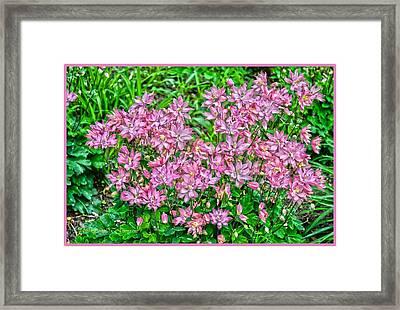 Pastel Pink Flowers Framed Print by Sonali Gangane