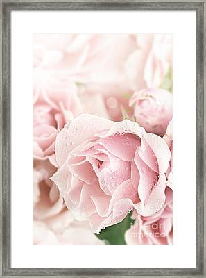 Pastel Pink Framed Print by Stephanie Frey