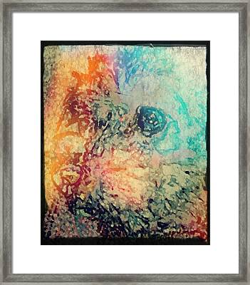 Pastel Pooch Framed Print by Lady Ex