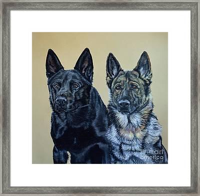 Pastel Portrait Of Two German Shepherds Framed Print by Ann Marie Chaffin