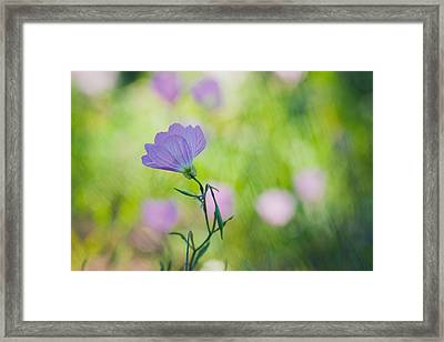 Pastel Profile Framed Print by Joel Olives
