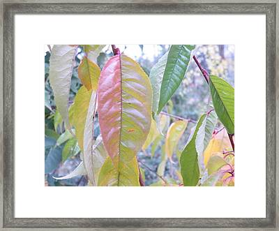 Pastel Symmetry  Framed Print