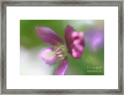 Framed Print featuring the photograph Pastel Symphony by Mary Lou Chmura