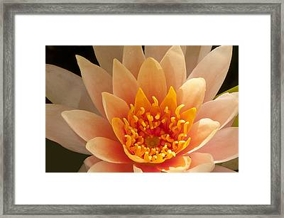 Framed Print featuring the photograph Pastel Waterlily by Phyllis Peterson