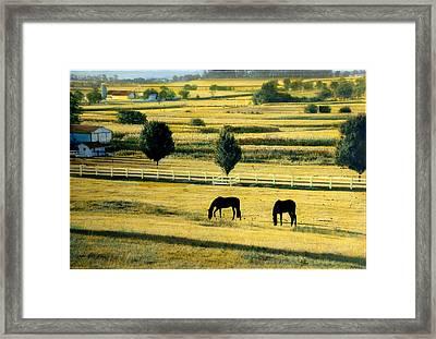 Pastoral Gold Framed Print
