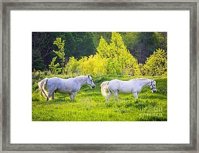 Pastoral Texas Framed Print by Inge Johnsson