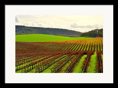 Asti Vineyards Digital Art Framed Prints