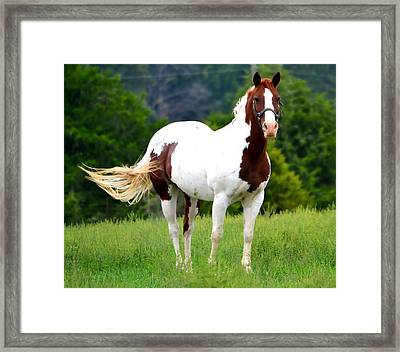 Pasture Framed Print by Deena Stoddard
