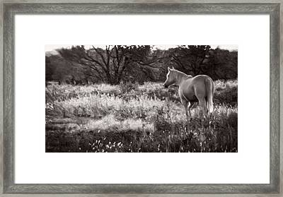 Pasture Framed Print by F Leblanc