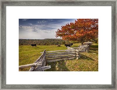 Pasture Fence Framed Print