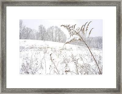 Pasture Field In Winter Framed Print by Thomas R Fletcher