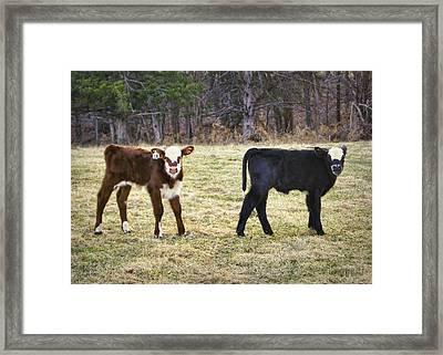 Pasture Pals Framed Print