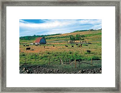 Pasture Framed Print by Terry Reynoldson