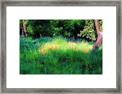 Patch Of Morning Sunlight Wildflowers  Framed Print