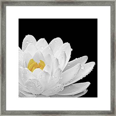Patch Of Gold Framed Print