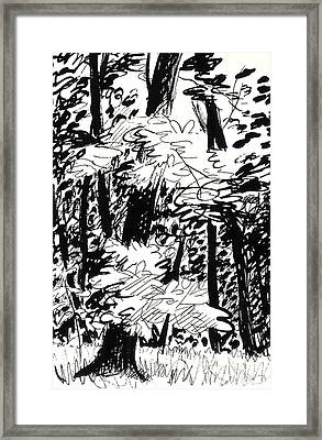 Patch Of Sunlight In The Woods Framed Print