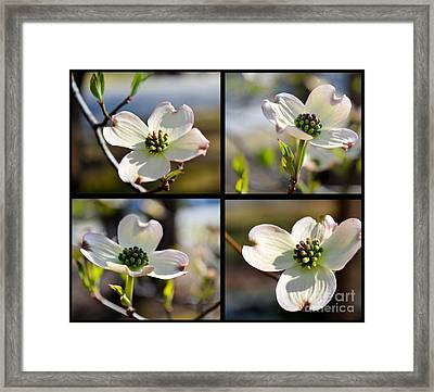 Patched Together Dogwoods Framed Print