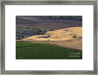 Patches Of Color 03 Framed Print by Arik Baltinester