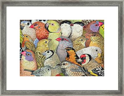 Patchwork Birds Framed Print by Ditz