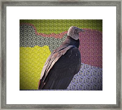 Patchwork Buzzard Framed Print