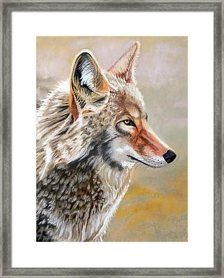 Patchwork Coyote Framed Print by Tanya Provines