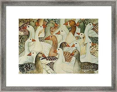 Patchwork Geese Framed Print by Ditz