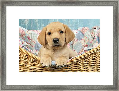 Patchwork Puppy Dp793 Framed Print by Greg Cuddiford
