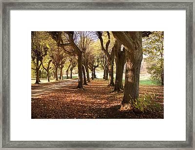 Path 1- Ostromecko Gardens Framed Print