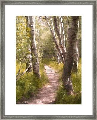 Path 1 Framed Print by Pamela Cooper
