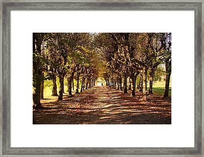 Path 3- Ostromecko Gardens Framed Print
