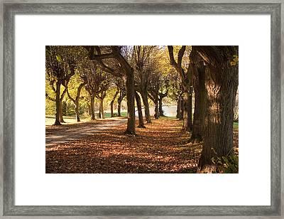 Path 5 - Garden Photography Framed Print