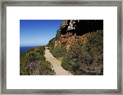 Path At Cape Of Good Hope Framed Print by Sami Sarkis