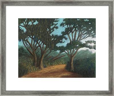 Path By Lake Murray 01 Framed Print