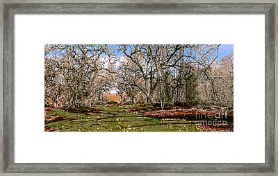 Path Framed Print by David Taylor