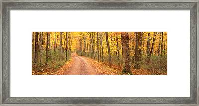 Path Hickory Run State Park Pa Usa Framed Print by Panoramic Images