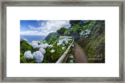 Path Hydrangea Framed Print by N R
