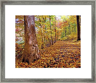 Path In Autumn Fairmount Park Philadelphia Pennsylvania Framed Print