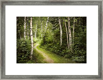 Path In Birch Forest Framed Print