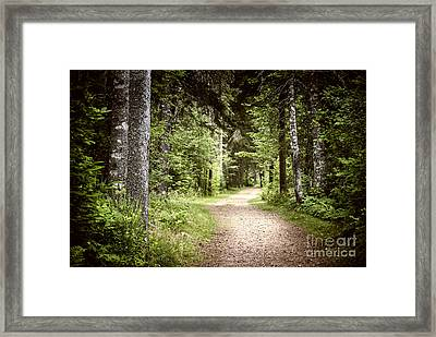 Path In Green Forest Framed Print