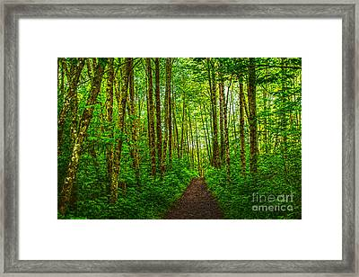 Path In Green Framed Print