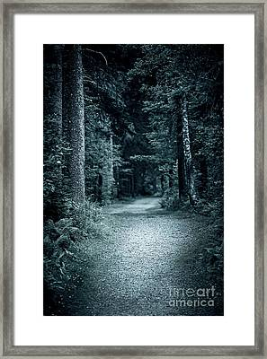 Path In Night Forest Framed Print