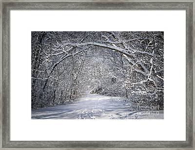 Path In Snowy Winter Forests Framed Print by Elena Elisseeva