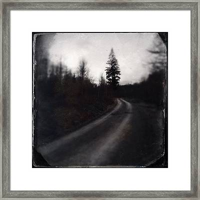 Path In The Dark Forest And Conifer Tree Framed Print