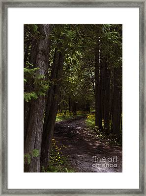 Path In The Dark Woods Framed Print by Margie Hurwich